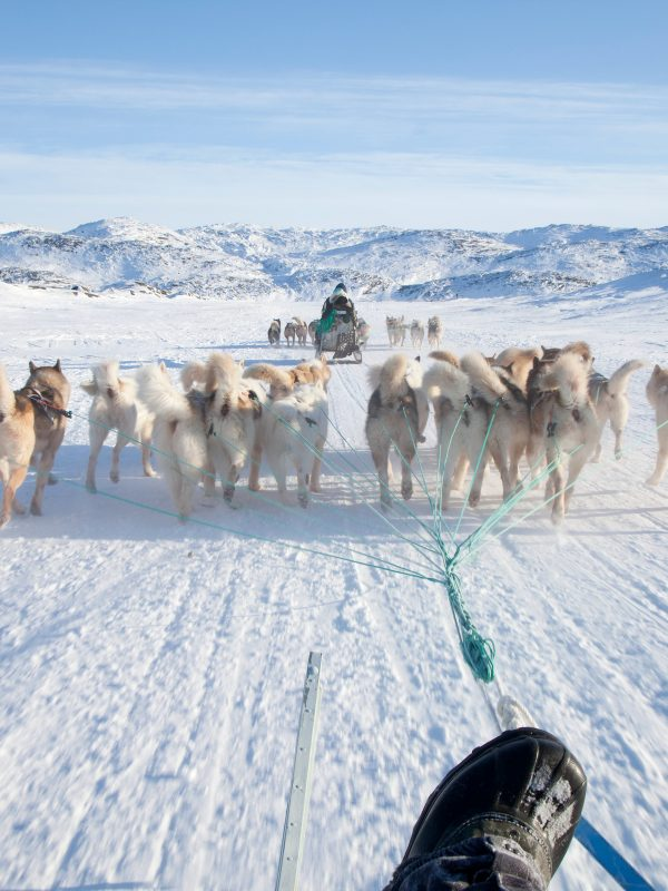 A dog sled ride on the main trail out of Ilulissat in Greenland on a bright spring winter's day