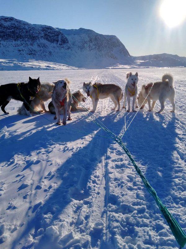 Hunde - Hotel Icefiord